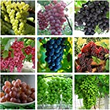 Best Garden Seeds Heirloom Mixed 9 Types of Grape Seeds, 30 Seeds, Professional Pack, tasty dense juicy fruits Photo, best price $13.05 new 2019